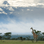 OlPejetaConservancy.Students.Educational.Tours.Kenya.png