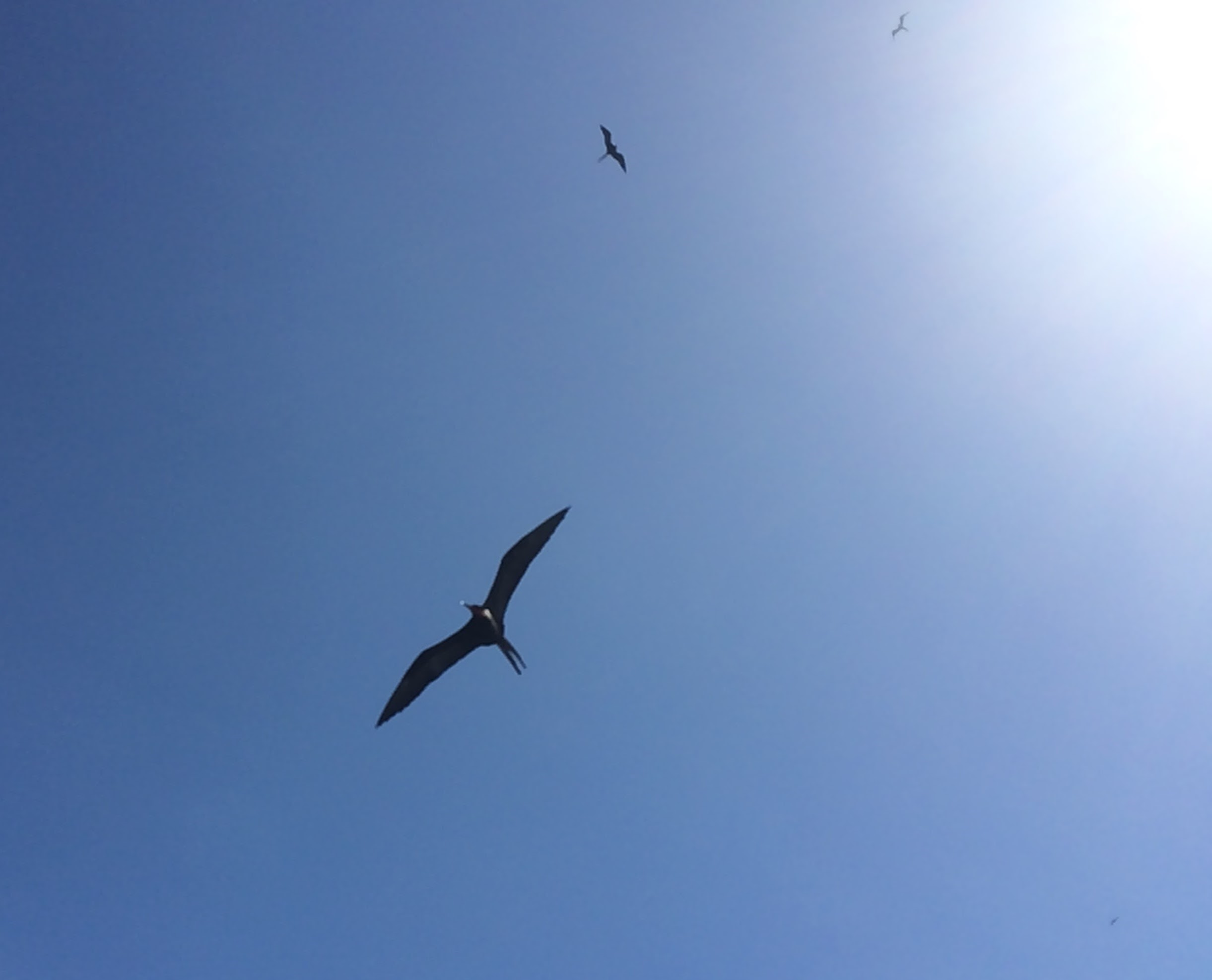 Belize Birdwatching- A Beginner's Guide - Evolve Tours