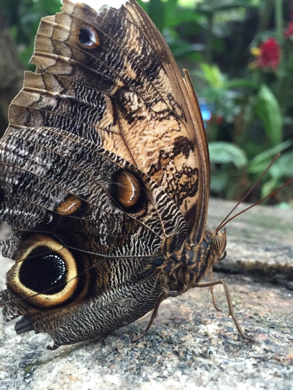 Butterfly at the Conservatory, Niagara Falls