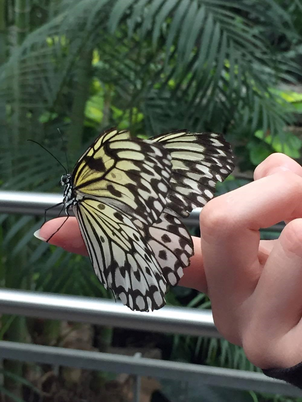Butterfly lands on student's hand, Niagara Falls